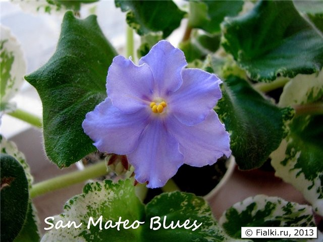 San Mateo Blues