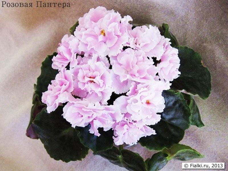 Розовая Пантера, К.Морев