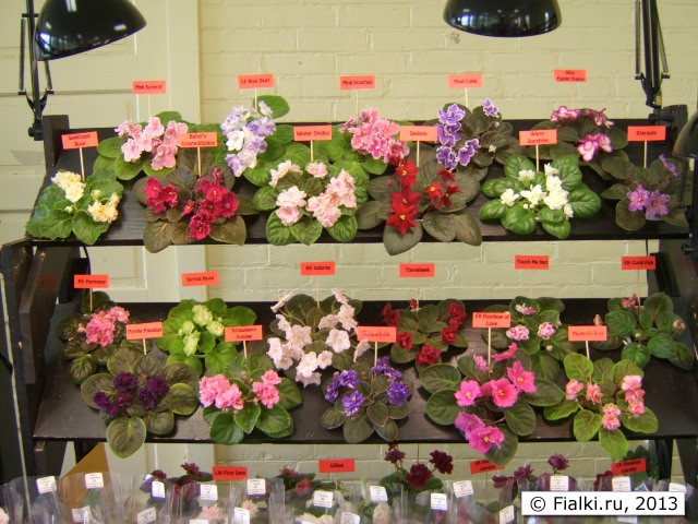violet barn display 1