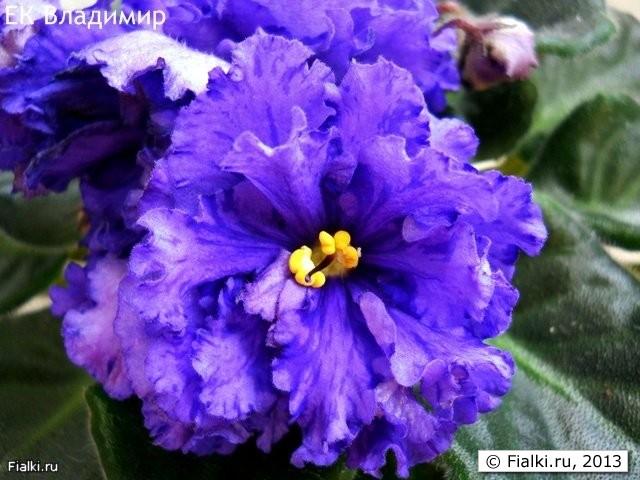 показать картинки цветов: