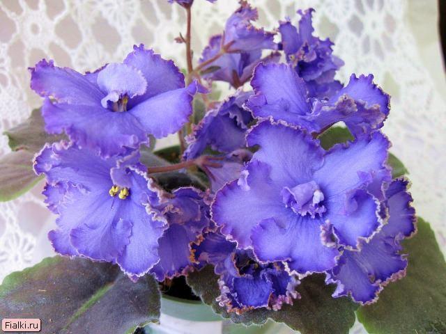 Названия садовых цветов с фото