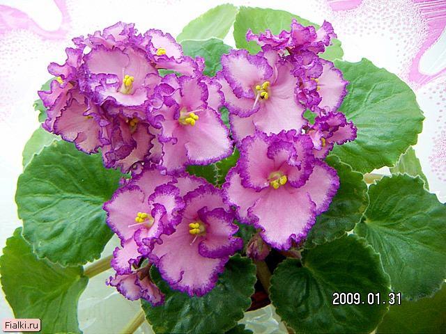 Соцветия цветков комнатные растения
