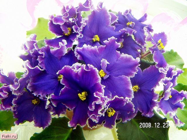 ночная орхидея фильм