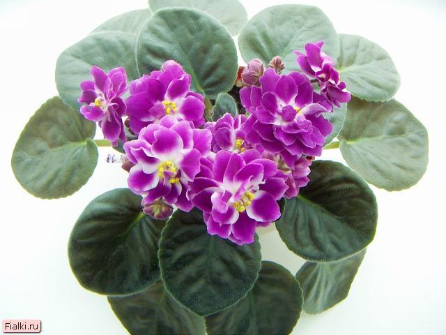 Бисероплетение цветы фото
