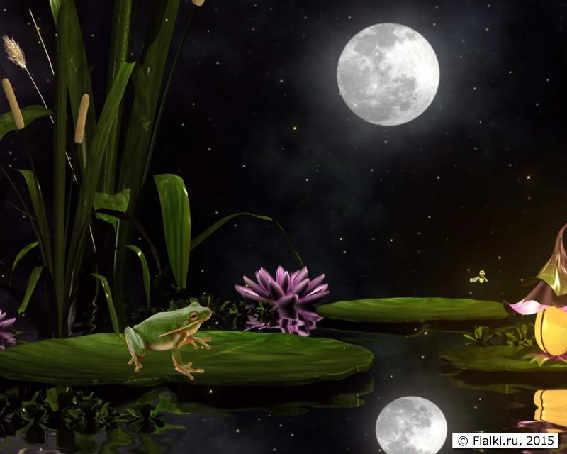 Лягушка на листе лилии под Луной