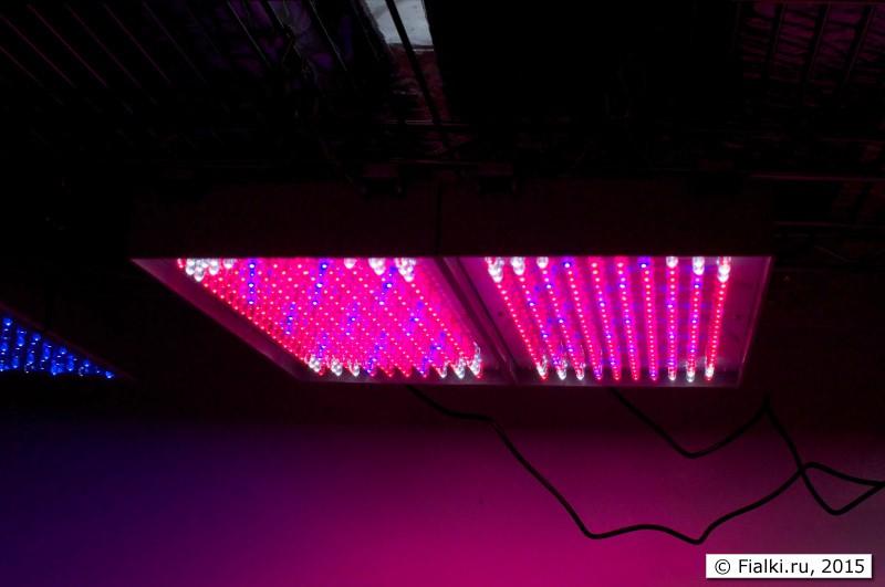 Красно-синие-белое светодиодное освещение ****копия