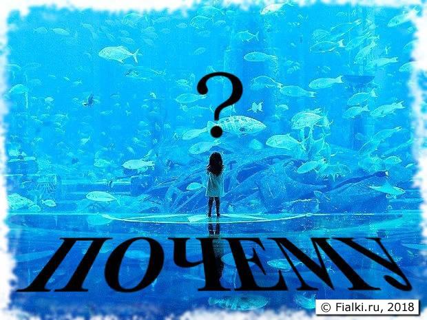 pochemu-ryby-v-akvariume-lezhat-na-dne_1